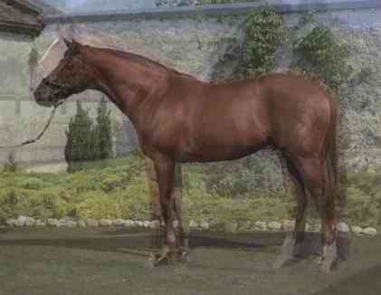 John Stezaker, Horse, 2012